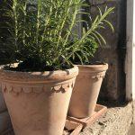 Domaine_saint_Hilaire_aromates