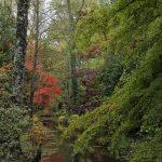 Arboretum d'Ilex à Meung-sur-Loire